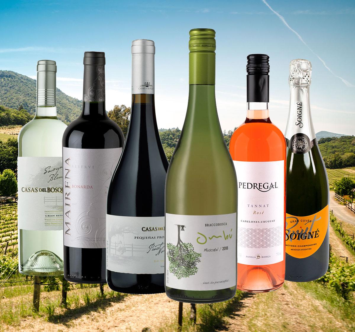 Saisonwein-Pakete: Köstliche Weine aus Uruguay, Chile und Argentinien