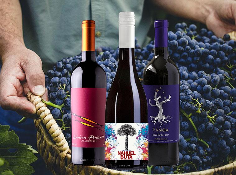 Araucaria Paket 3: Chilenische Rotweine
