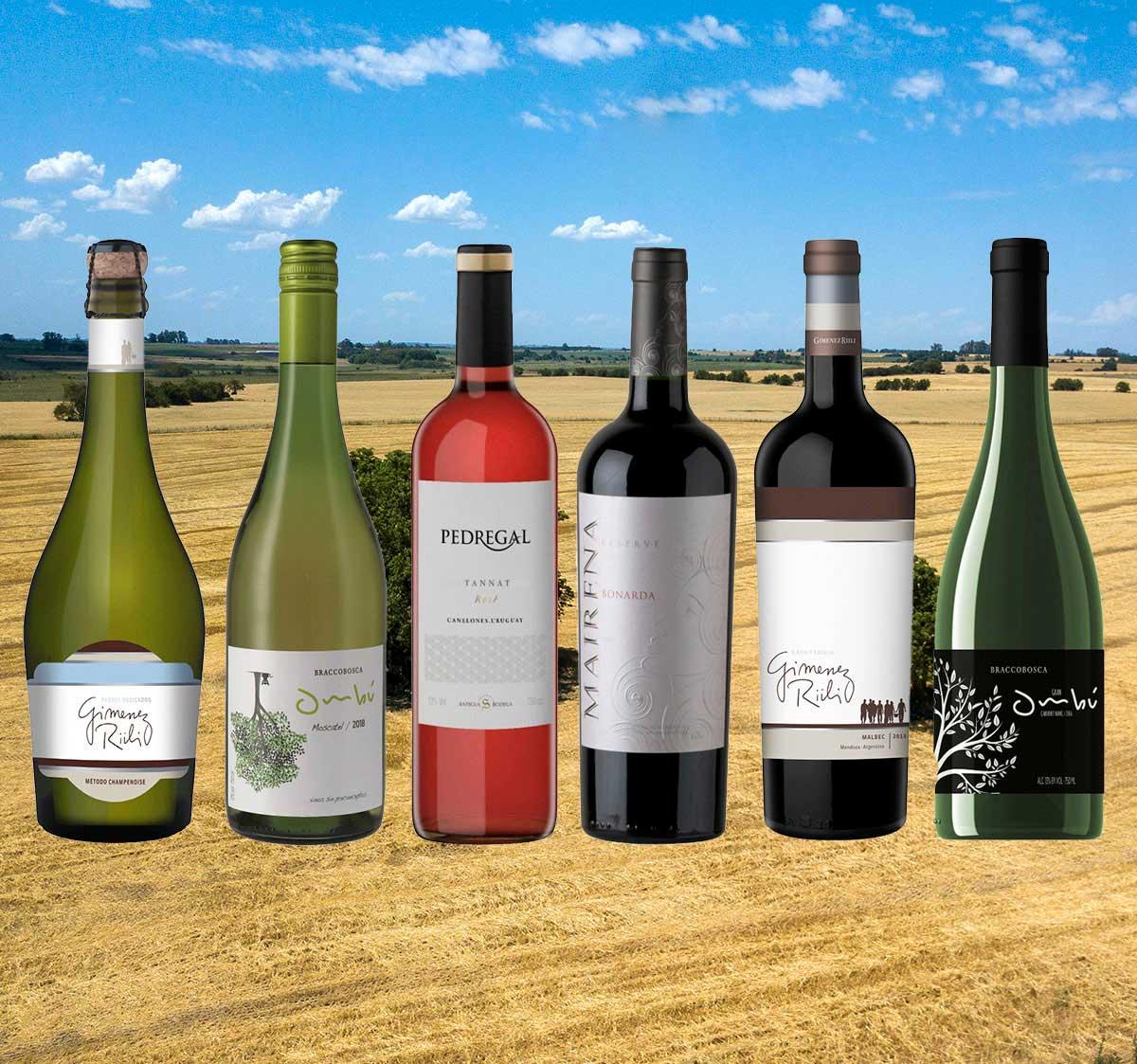 Probierpaket 17 Eine luxuriöse Auswahl großer Weine aus Argentinien und Uruguay