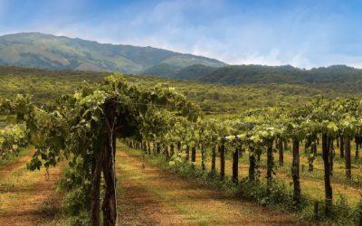 Die Weine von Salta: ein Spaziergang durch die Wolken.
