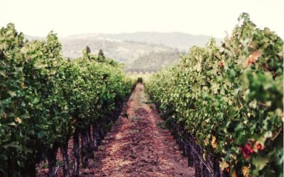 Wir laden Sie ein, ein wenig über Uruguay und seine Weine zu erfahren.