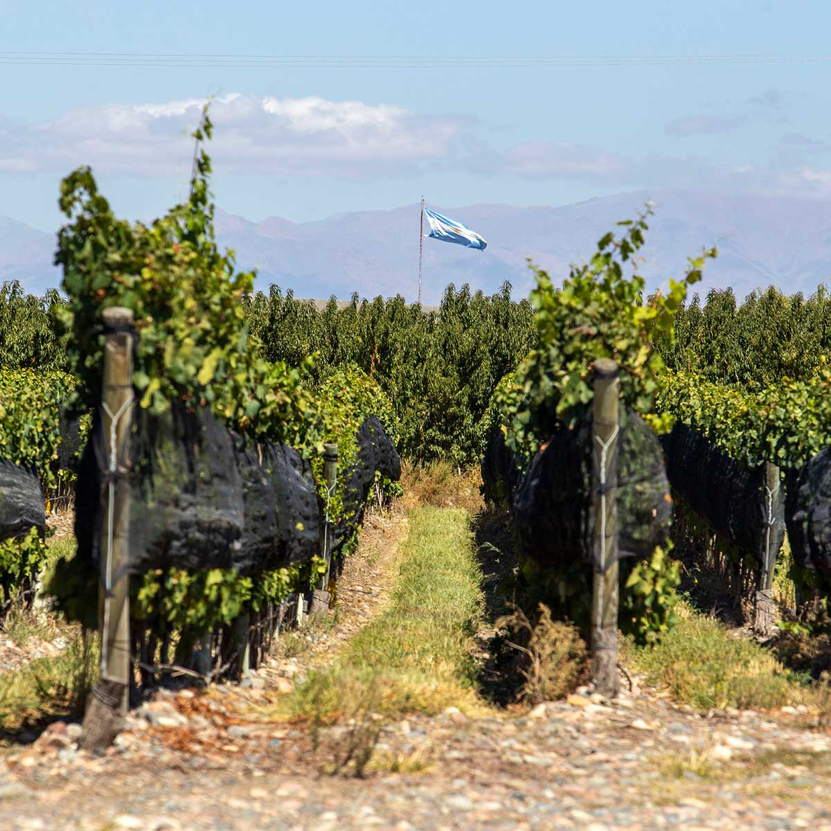 Why do we love Malbec so much?